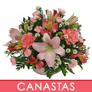 f. Canasta