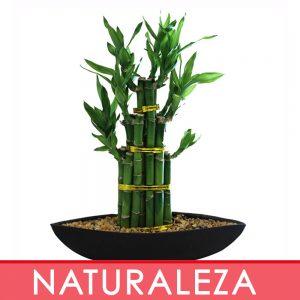 c. Naturaleza Viva